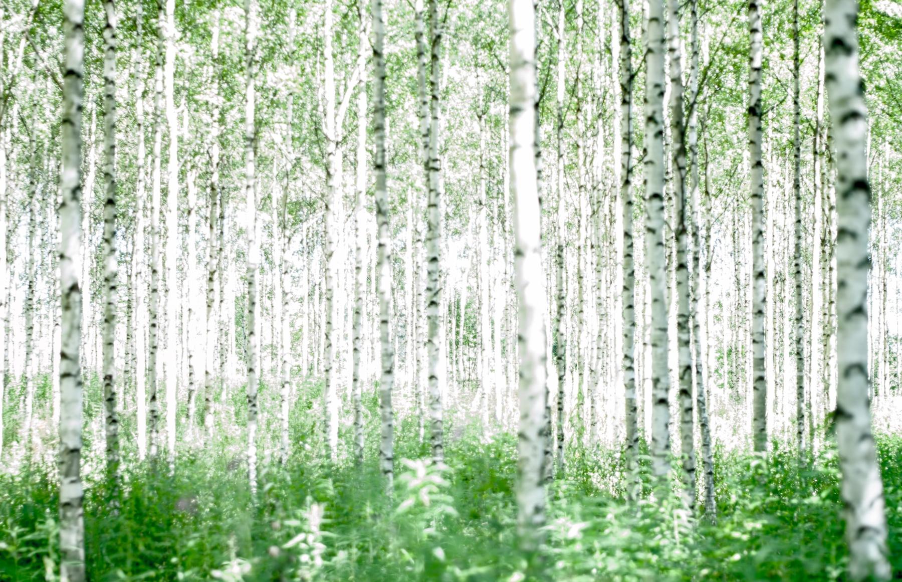 Kesusmaa, Norra Karelen