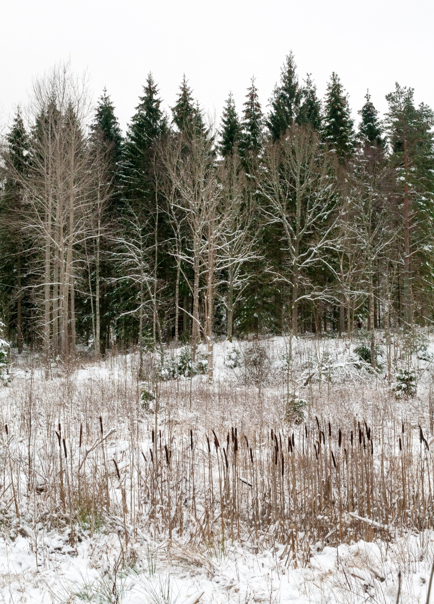 Åsens bruk, Dalsland
