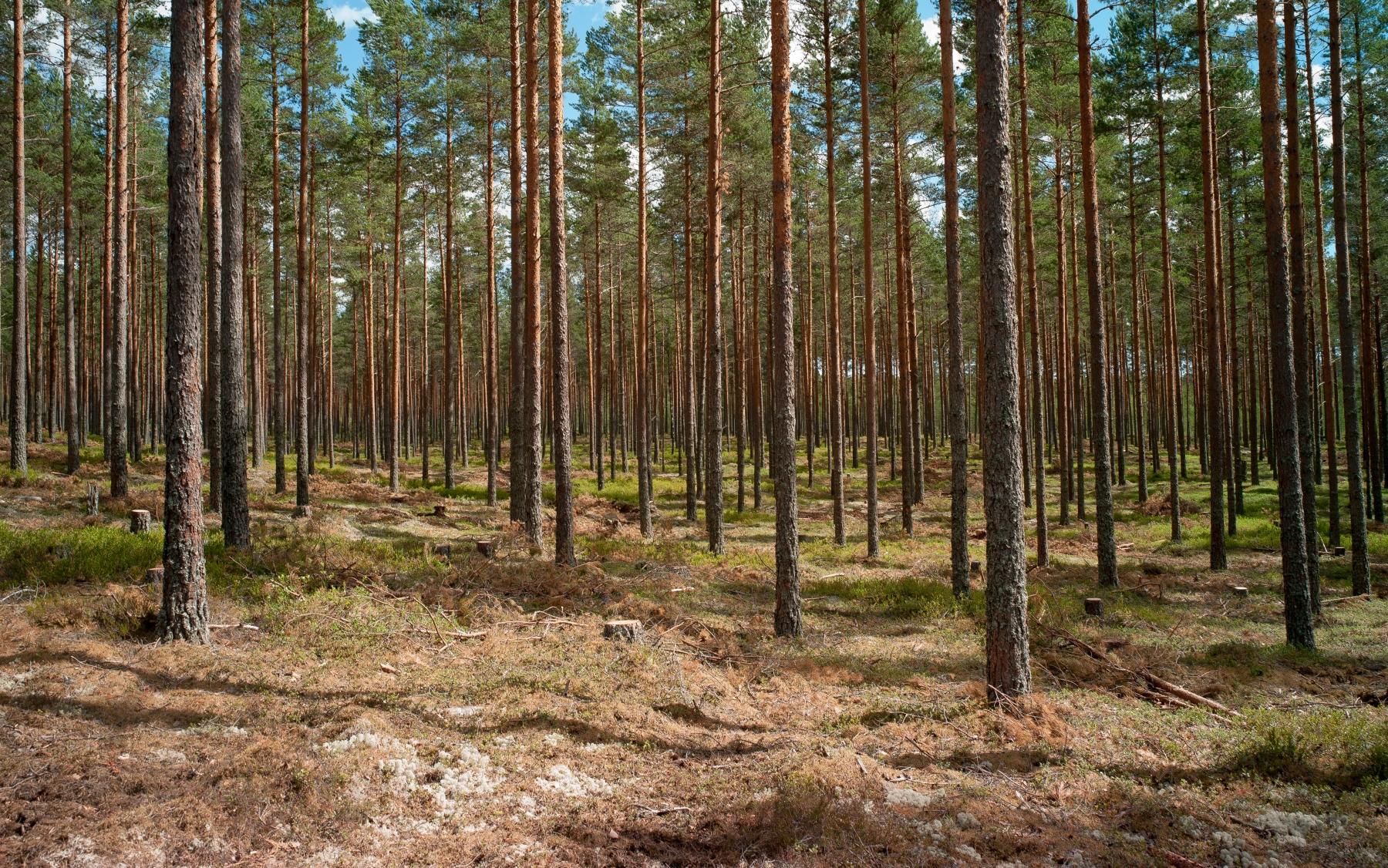 Sunnemo, Värmland