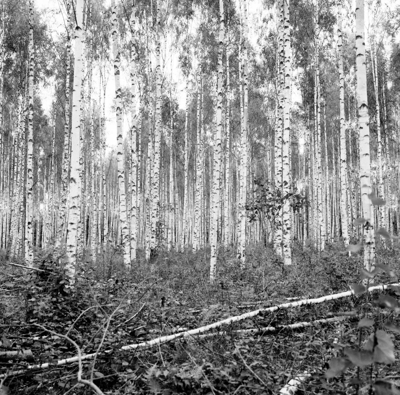 I de magiska skogarna